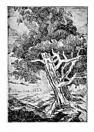 La quercia