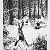 Lepri nel bosco