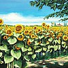 Girasoli in valle